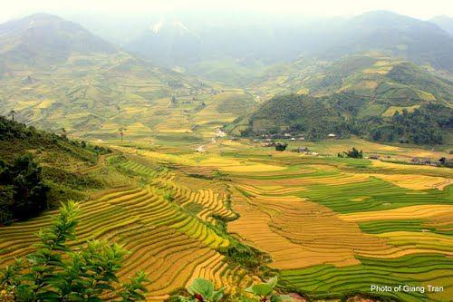 Thung lũng Cao Phạ.jpg