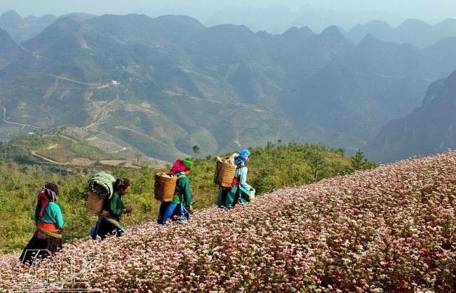 Tour Hà Giang, Đồng Văn, Lũng cú 2.jpg