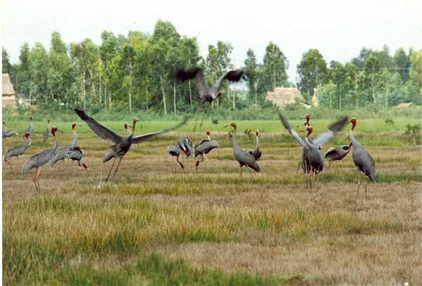 Tour du lịch Tràm chim, Gáo Giồng 2